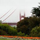 golden gate fog by andrewnelson