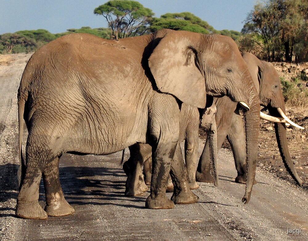 Elephant Roadblock  by jacqi