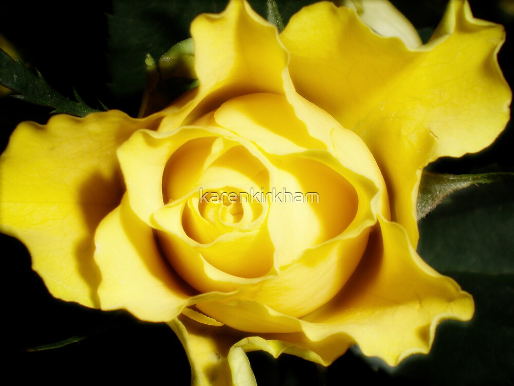yellow tea rose by karenkirkham