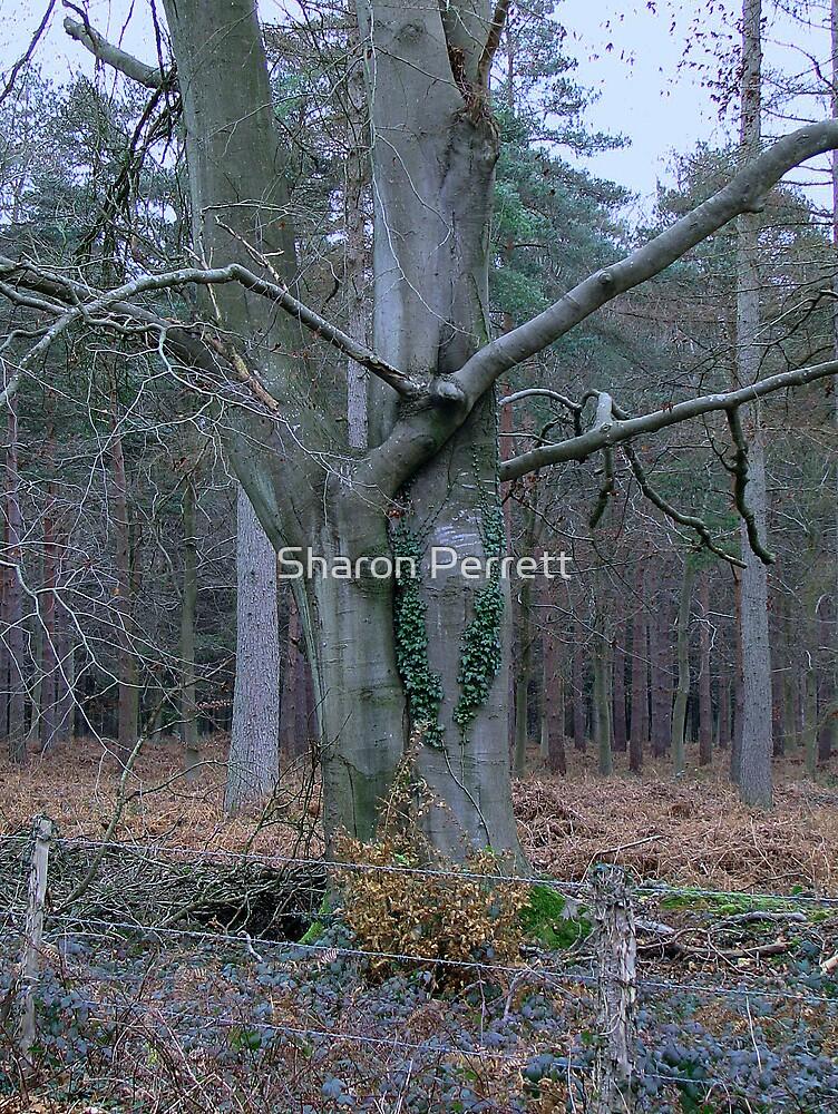 Hug a tree by Sharon Perrett