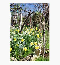 A Touch of Spring in Our Garden Photographic Print