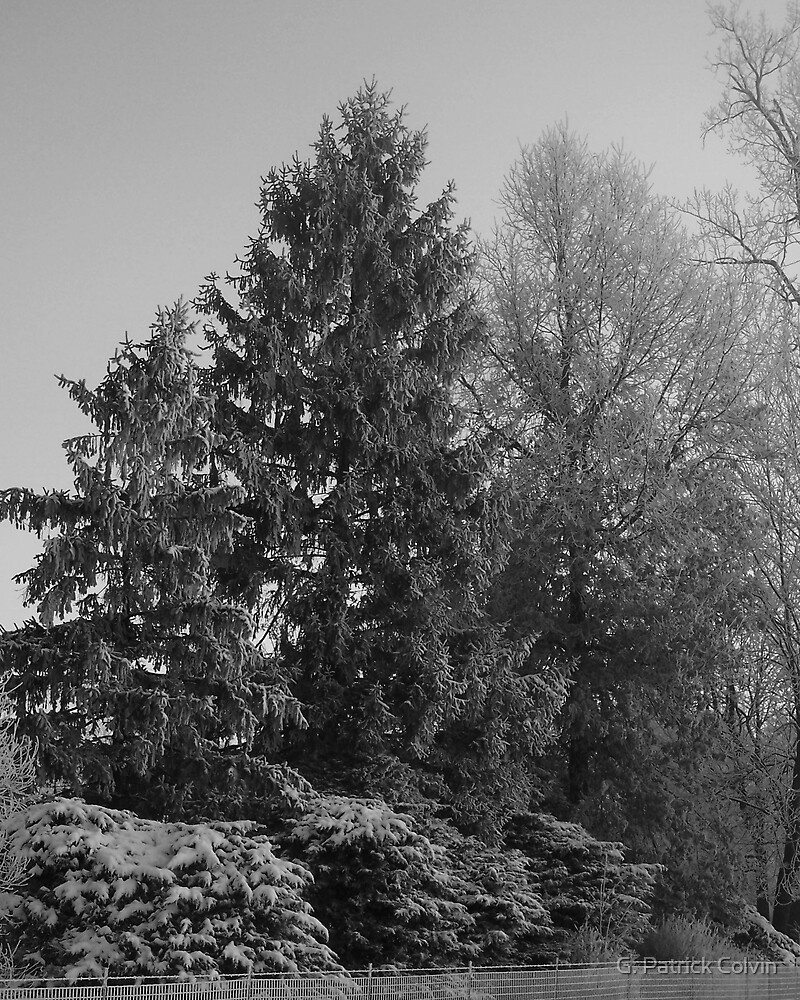 Winter Trees by Gregory Colvin