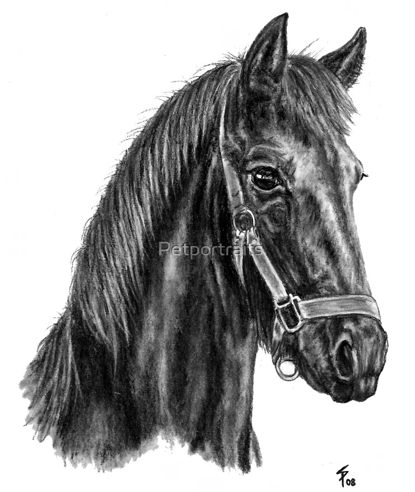 Young Friesian horse by Petportraits