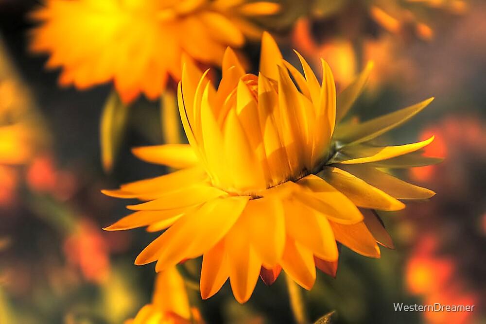 ~ Til Sunbeams Find You ~ by WesternDreamer