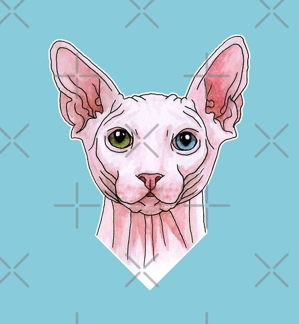 Sphynx cat portrait by savousepate