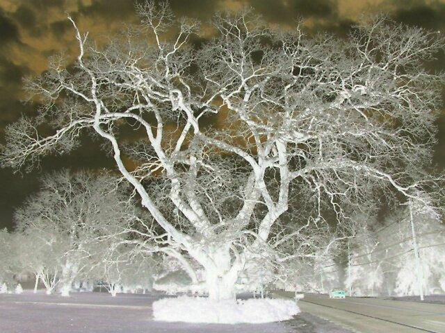 Negative Tree in Ice by suelucat