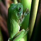 Green tree frog by AnnaKT