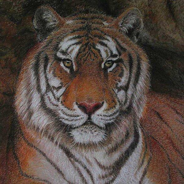 Tiger by Atula Siriwardane