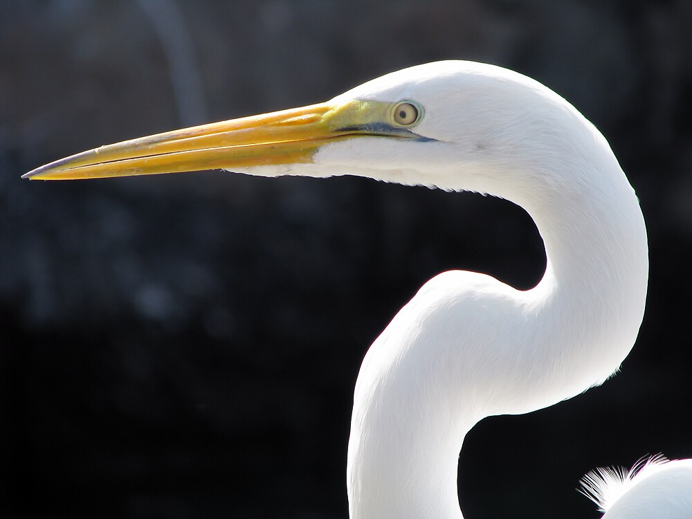 White Egret by Rebecca Cruz