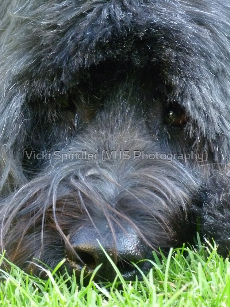 Nosey by Vicki Spindler (VHS Photography)