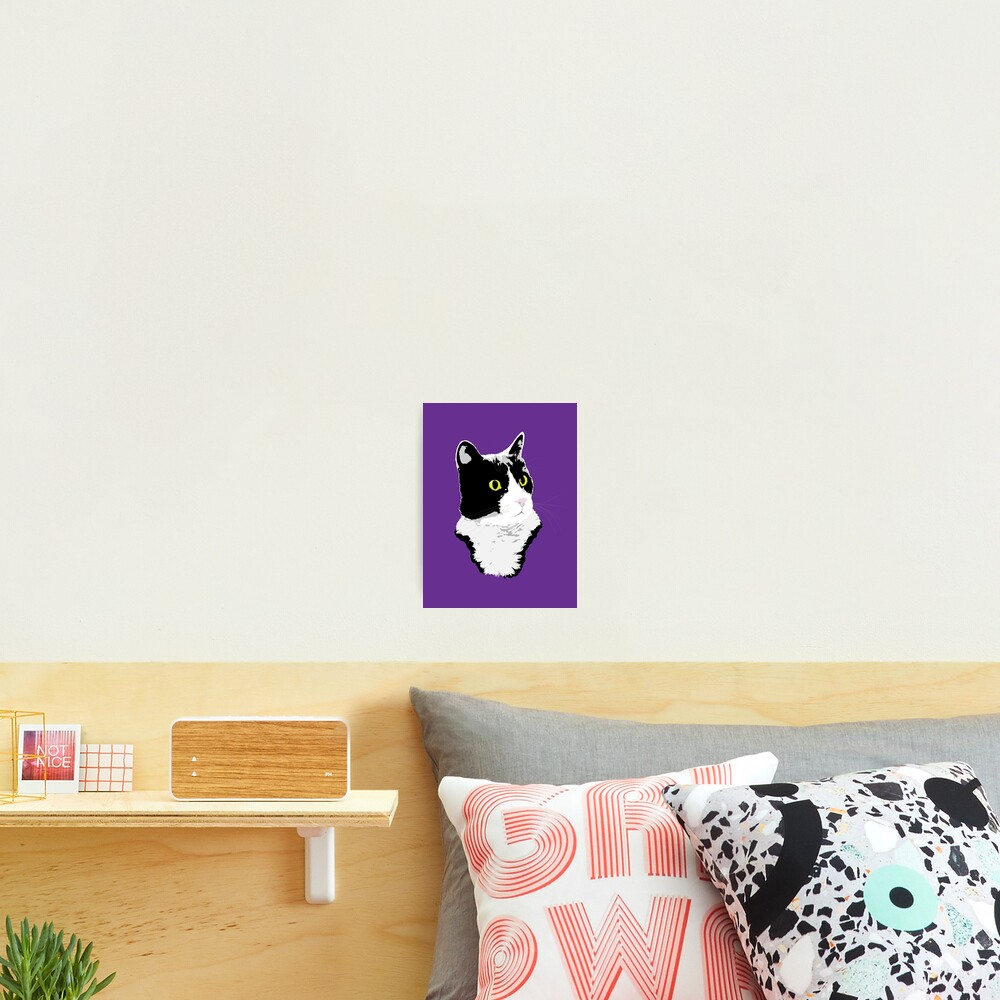 Regal Tuxedo Kitty Photographic Print