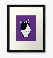 Regal Tuxedo Kitty Framed Print