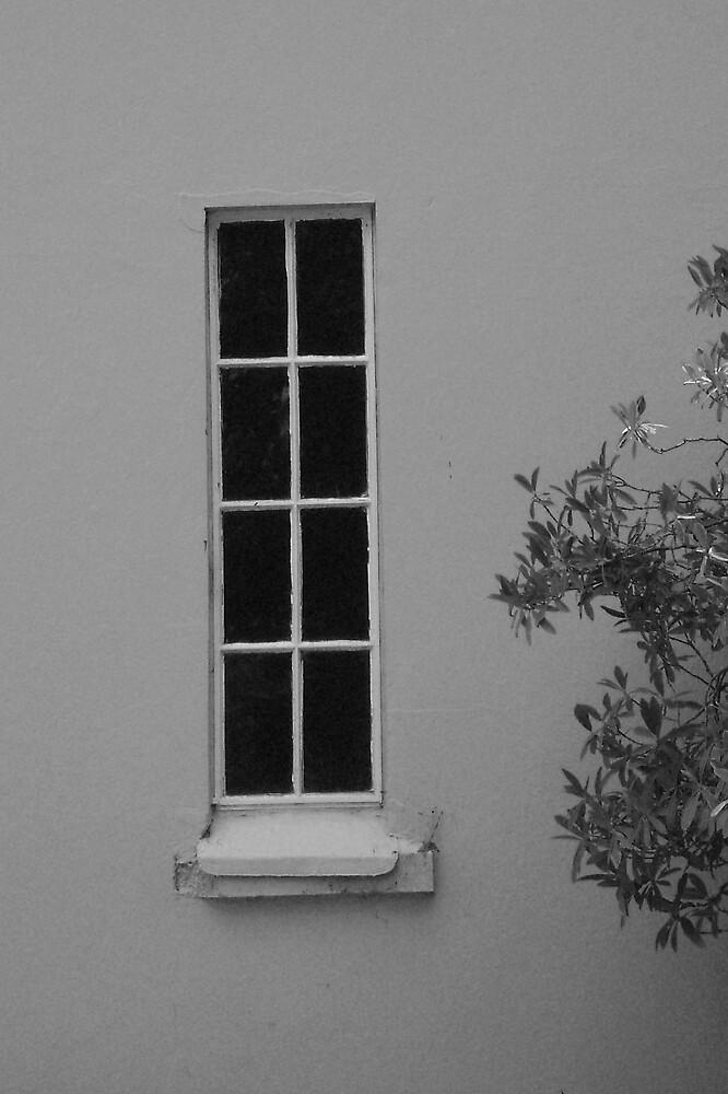 The Window by ajyenney