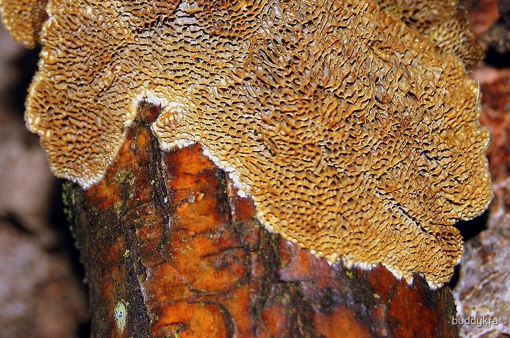 Wooden Coral by buddykfa