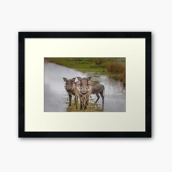 Warthog Island Framed Art Print