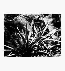spike Photographic Print