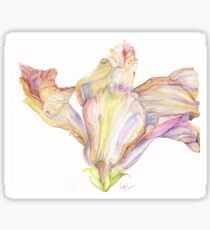 Faded Hibiscus Blossom Sticker