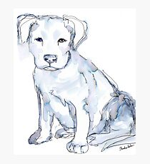 Pit Bull Puppy (for Kerry), watercolor Photographic Print