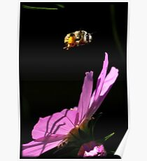 Fly By Bee.. Poster