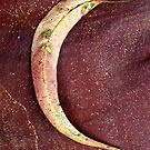 Gum Leaf - Australia by Mette  Spange