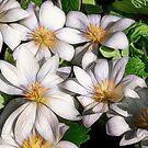 Wildflowers by jules572