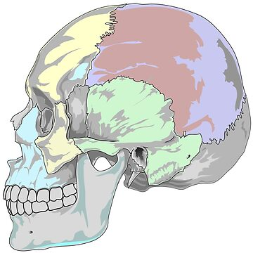 COLORFUL SKULL (POP ART STYLE) by GayRiot