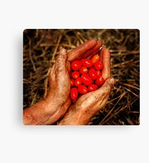 Gardeners rewards Canvas Print
