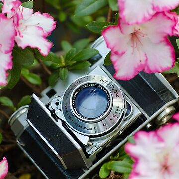 Retro Camera In Bloom by rachelallison