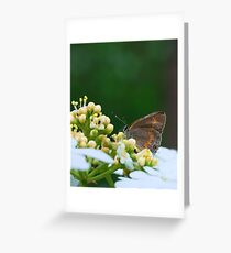 First Macro of the Season: Gray Hairstreak Greeting Card
