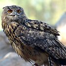 Eagle Owl by loiteke