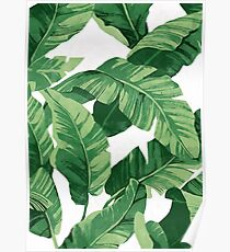 Tropical banana leaves II Poster
