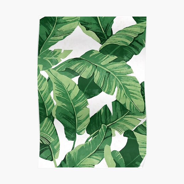 Tropical banana leaves II Poster