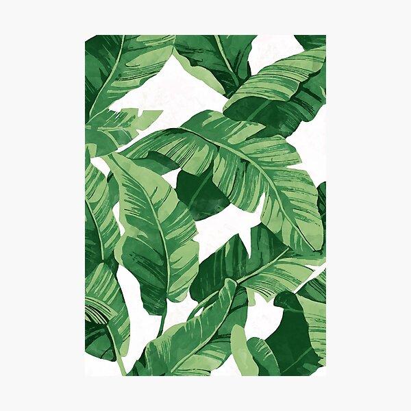 Tropical banana leaves II Photographic Print