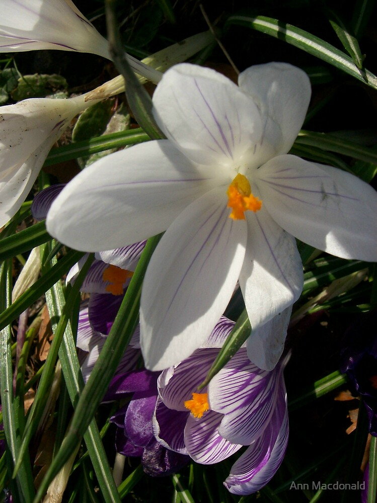 flowers by Ann Macdonald