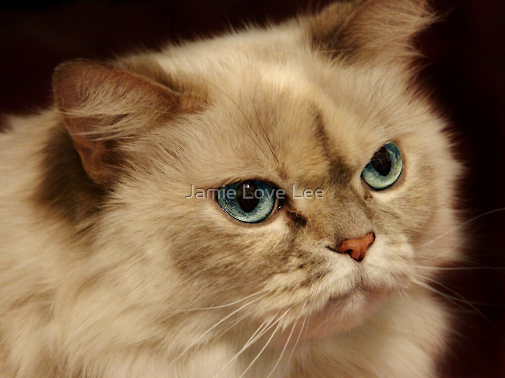 Blue Eyes by Jamie Lee