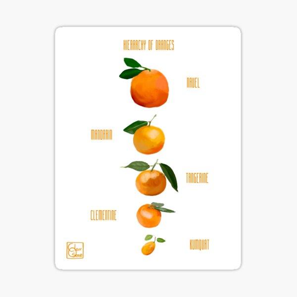 Hierarchy of Oranges Sticker