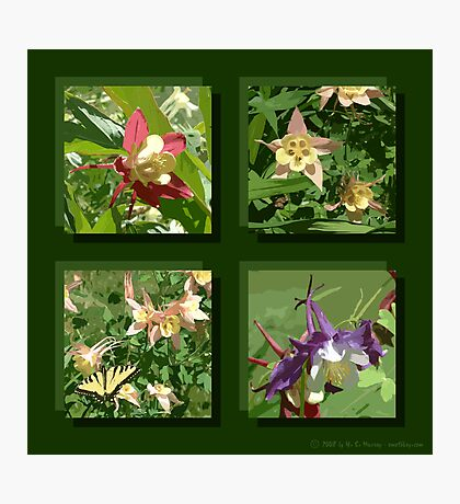 Columbine Photographic Print