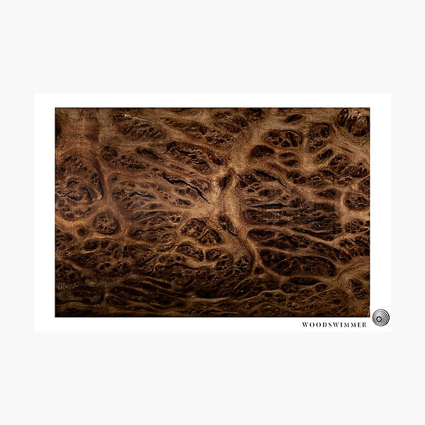 WoodSwimmer Still no.3, Red Mallee Burl Photographic Print