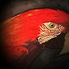 Red Macaw by Richard-Gary Butler