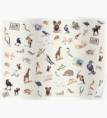 Lodge décor - Wildlife festival Poster