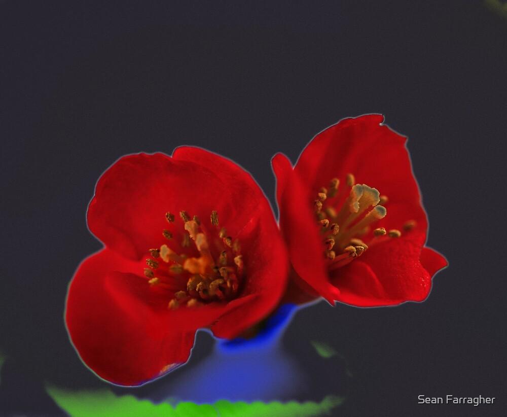 FLOWER by Sean Farragher