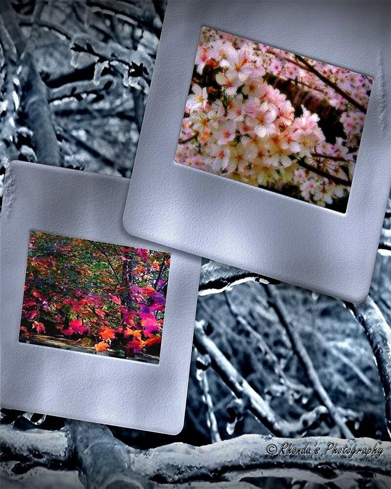 Seasons change..... by Rhonda Ford