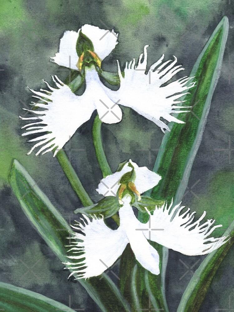 Weiße Reiher Orchideenblüten (Habenaria Radiata) von savousepate