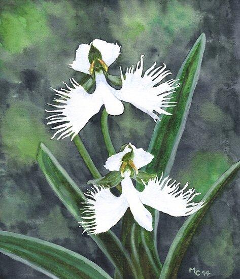 White egret orchid flowers habenaria radiata posters by white egret orchid flowers habenaria radiata by savousepate mightylinksfo