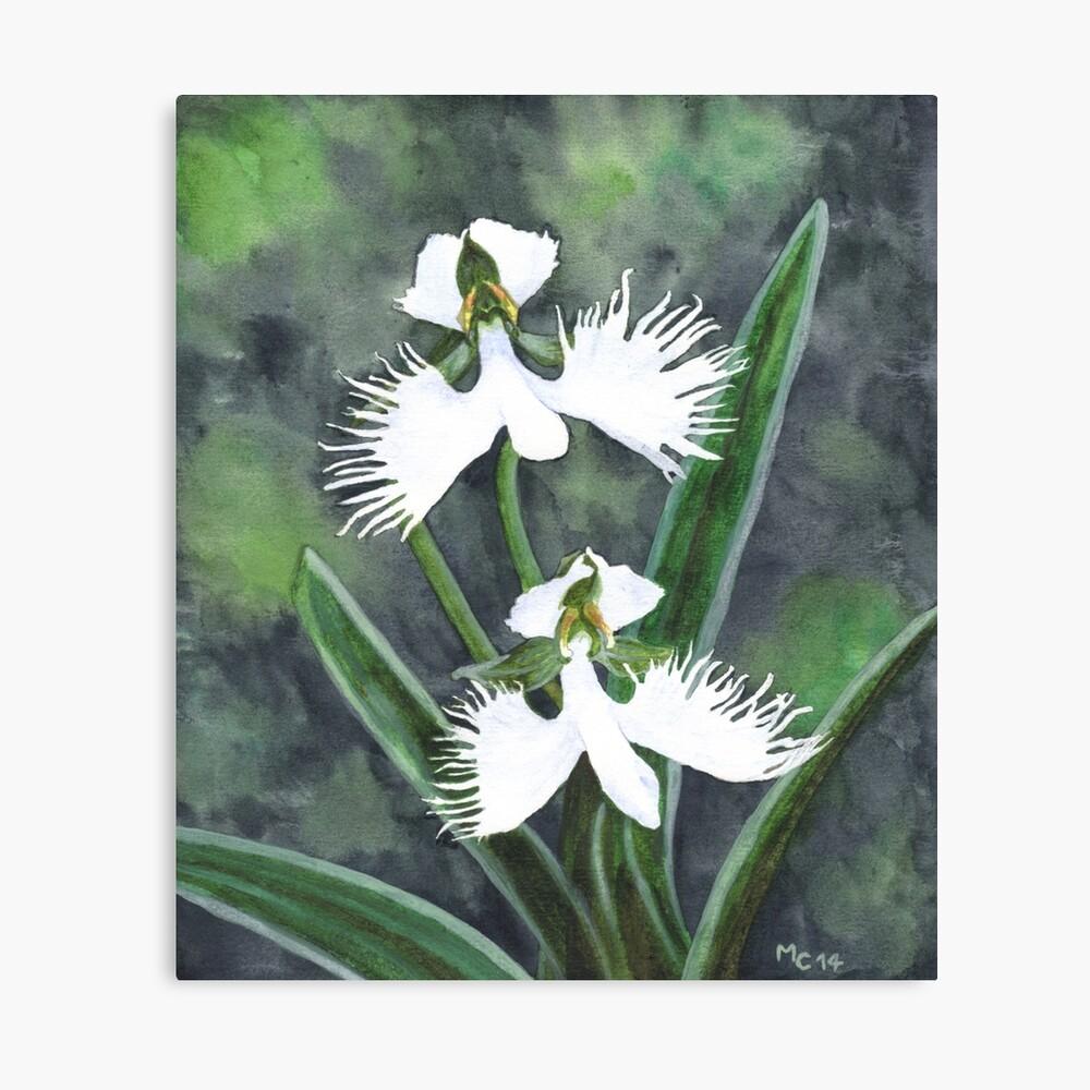 Weiße Reiher Orchideenblüten (Habenaria Radiata) Leinwanddruck