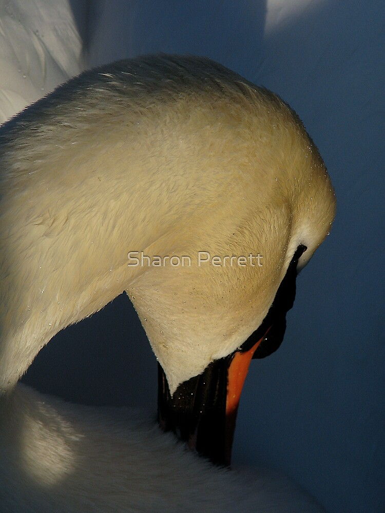 I can't quite reach that itch by Sharon Perrett