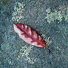 Leaf on Rock by Werner Padarin