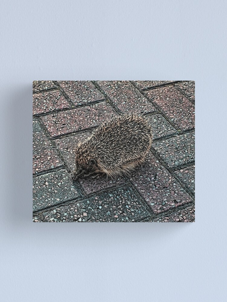 Alternate view of Hedgehog Canvas Print