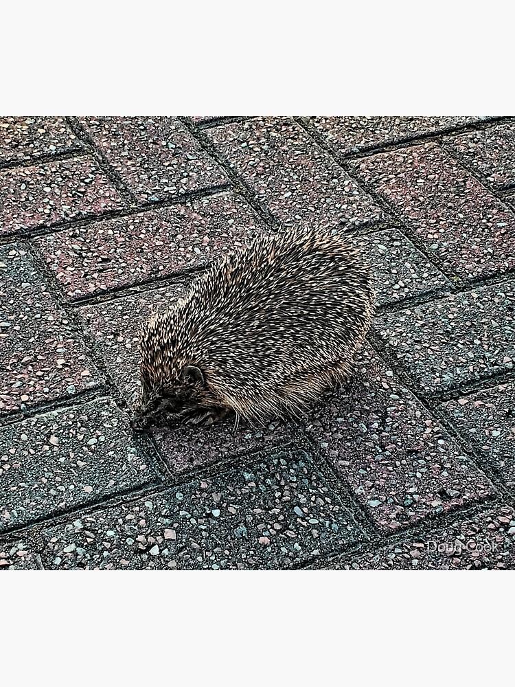 Hedgehog by DougCook