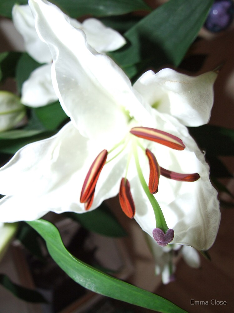 White lilly by Emma Close